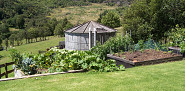 Raised garden beds are recommended by the author for all around healthier plants. (Photo: melodi2/morguefile.com)
