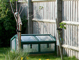 Building a cold frame or mini greenhouse extends your growing season. (Bev Lloyd-Roberts/sxc.hu)
